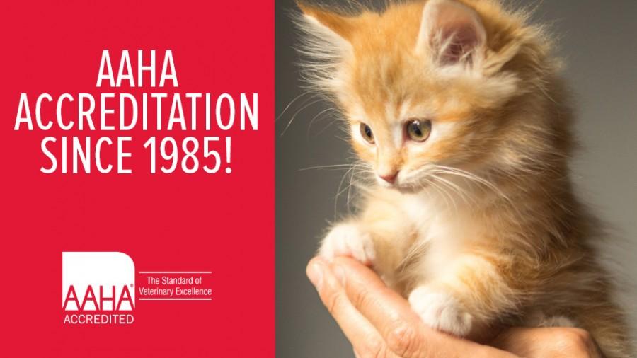 AAHA Accreditation Since 1985!