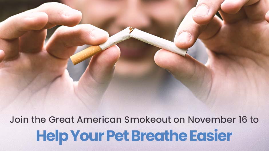 Join the Great American Smokeout on November 16 to Help Your Pet Breathe Easier