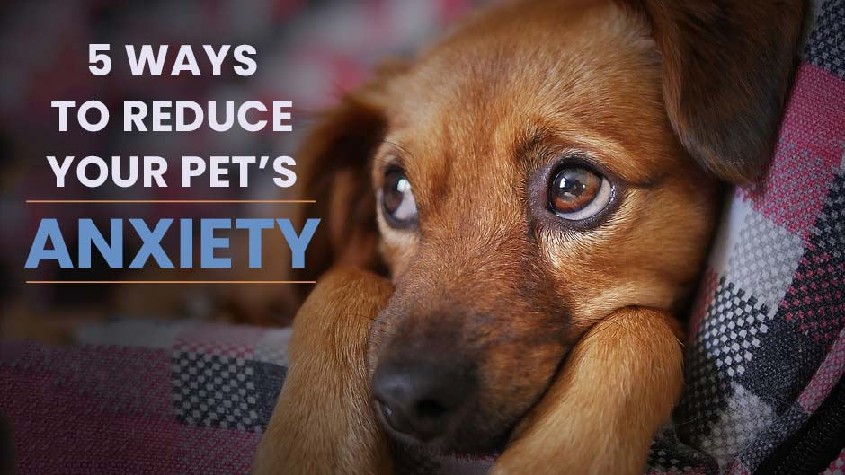 5 Ways to Reduce Your Pet's Anxiety