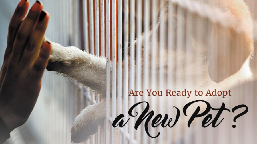 Are You Ready to Adopt a Pet?