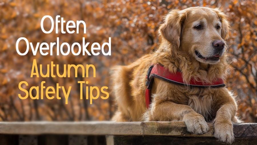 Often Overlooked Autumn Safety Tips