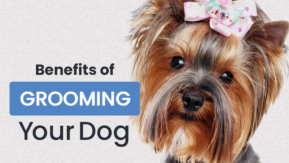 Benefits of Grooming Your Dog