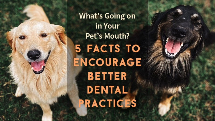 What's Going on in Your Pet's Mouth? 5 Facts to Encourage Better Dental Practices