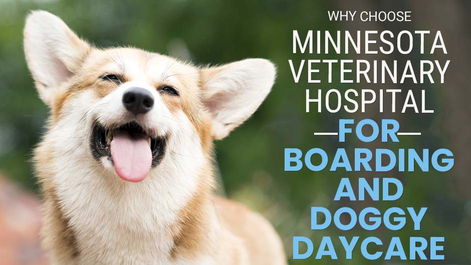 Why Choose Minnesota Veterinary Hospital for Boarding and Doggy Daycare
