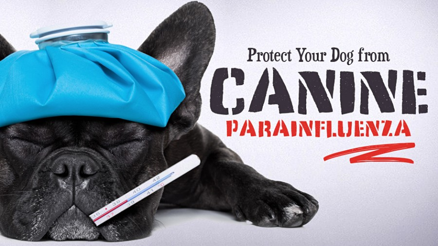 Protect Your Dog from Canine Parainfluenza