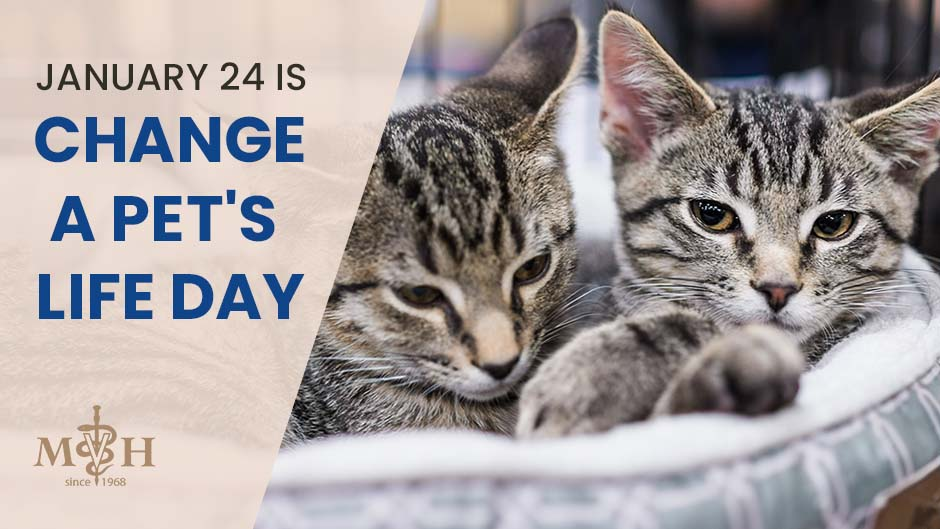 January 24 is Change a Pet's Life Day