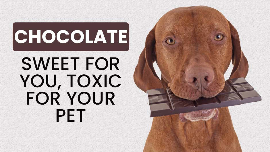 Chocolate: Sweet for You, Toxic for Your Pet