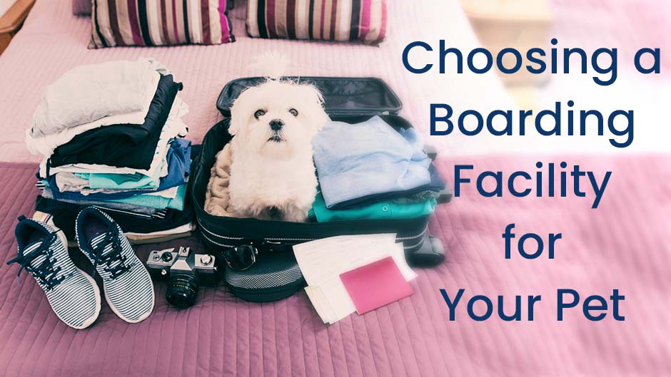 Choosing a Boarding Facility for Your Pet