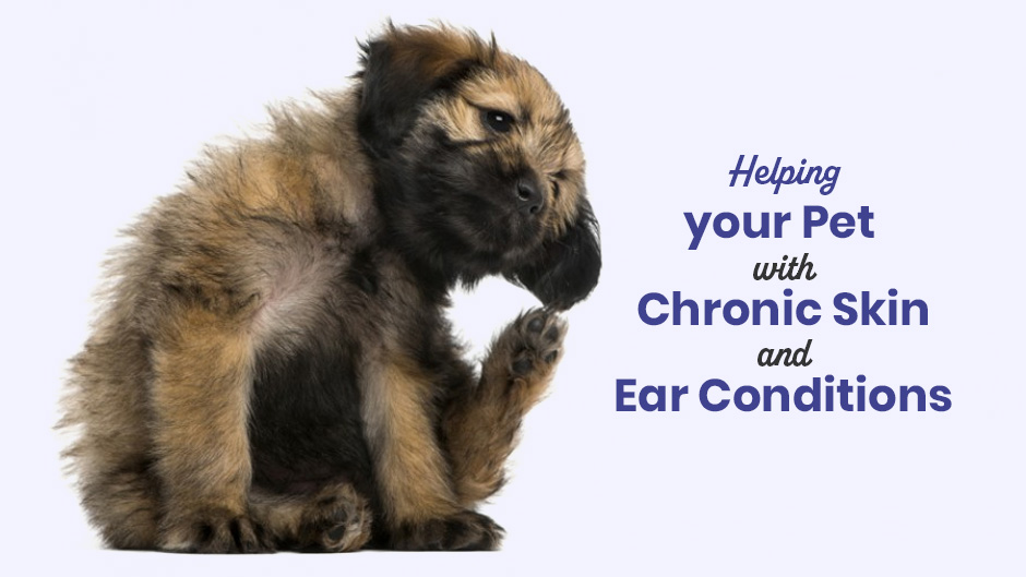 Helping your Pet with Chronic Skin and Ear Conditions