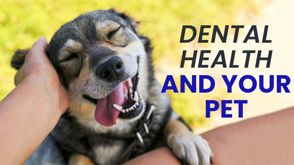 Dental Health and Your Pet