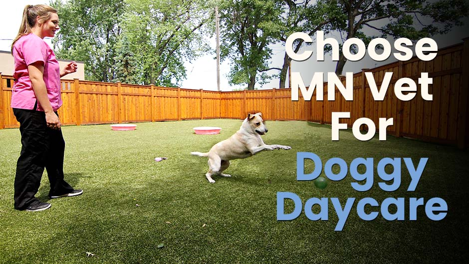 Choose MN Vet For Doggy Daycare