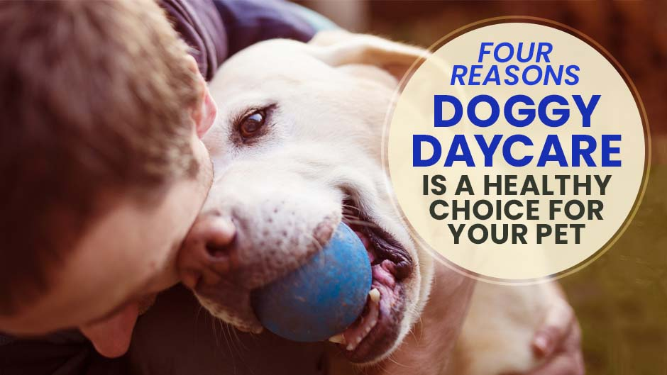Four Reasons Doggy Daycare is a Healthy Choice for Your Pet