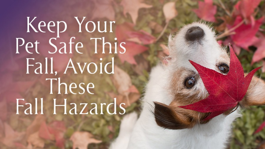 Keep Your Pet Safe This Fall, Avoid These Fall Hazards