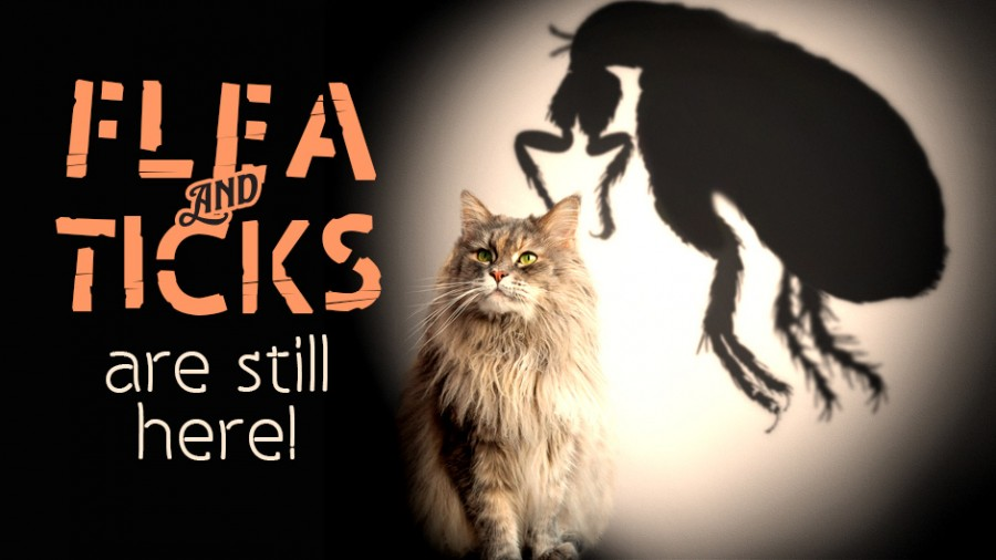 Fleas and Ticks Are Still Here!