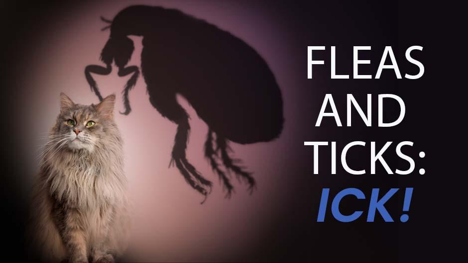 Fleas and Ticks: ICK!