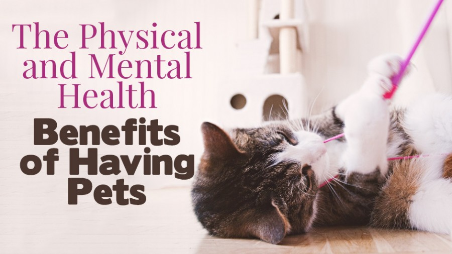 The Physical and Mental Health Benefits of Having Pets