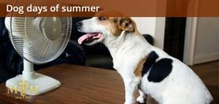 Heatstroke Prevention for the Dog Days of Summer