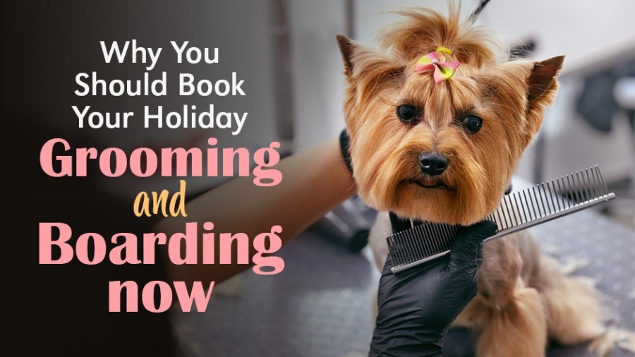 Why You Should Book Your Holiday Grooming and Boarding Now