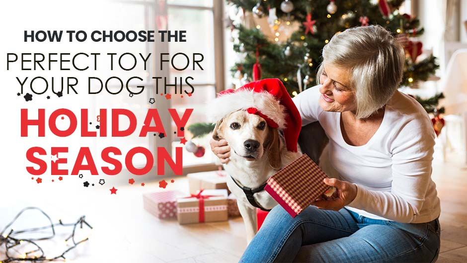 How to Choose the Perfect Toy for Your Dog This Holiday Season