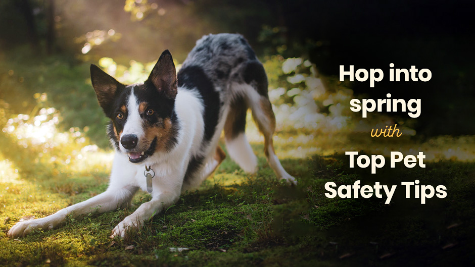 Hop into Spring with Top Pet Safety Tips