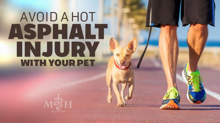 Avoid a Hot Asphalt Injury with Your Dog