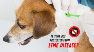 Is Your Pet Protected from Lyme Disease?