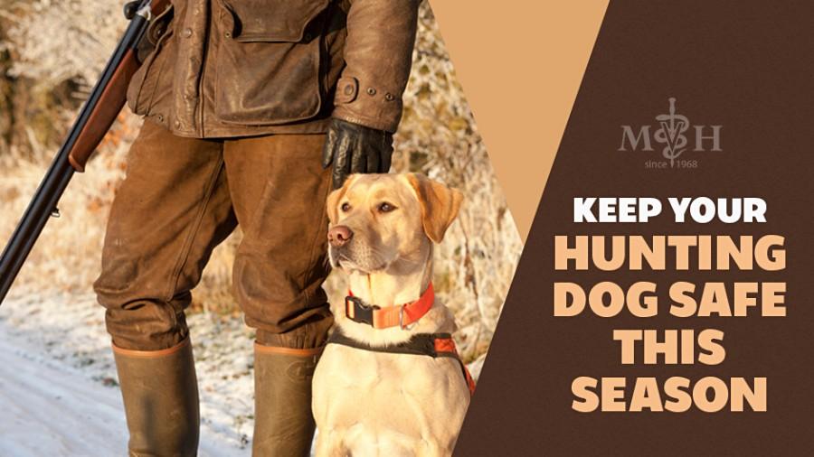 Keep Your Dog Safe This Hunting Season