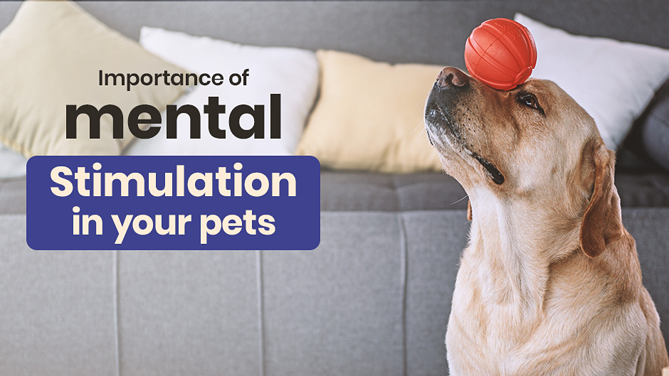 Importance of Mental Stimulation in Your Pets