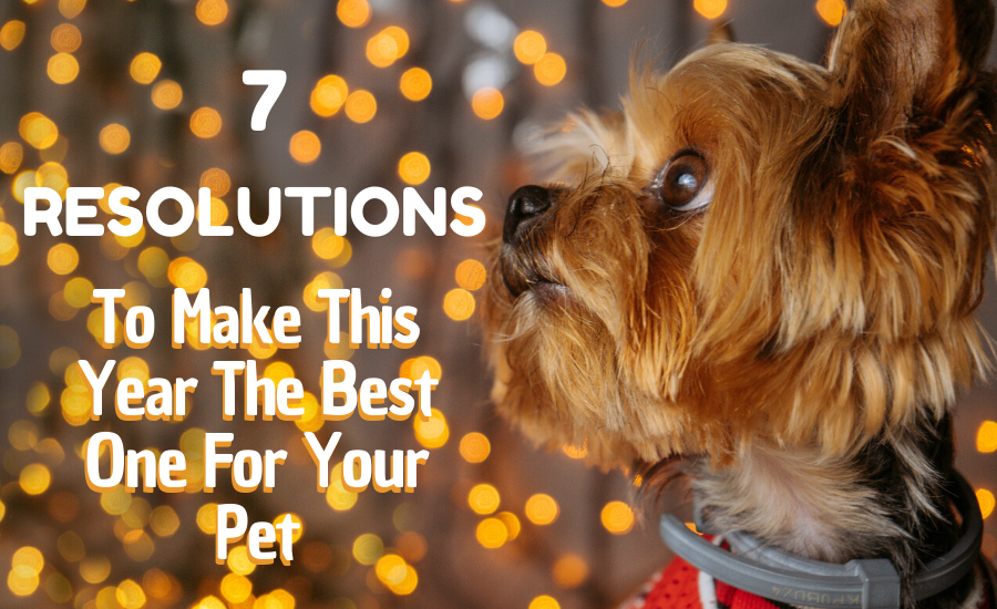 7 Resolutions to Make this New Year the Best One Yet for Your Pet