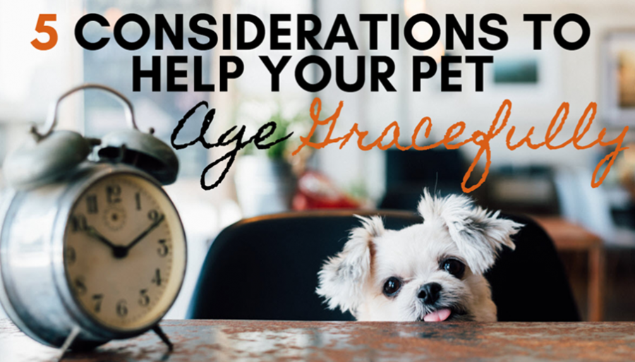 5 Considerations to Help Your Pet Age Gracefully