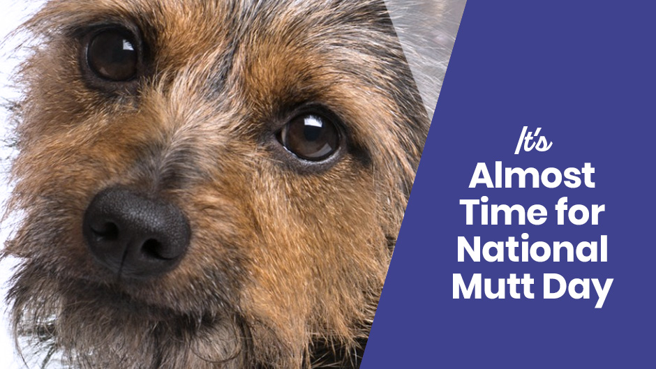 It's Almost Time for National Mutt Day