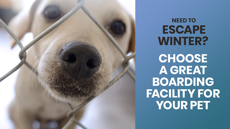 Need to Escape Winter? Choose a Great Boarding Facility for Your Pet