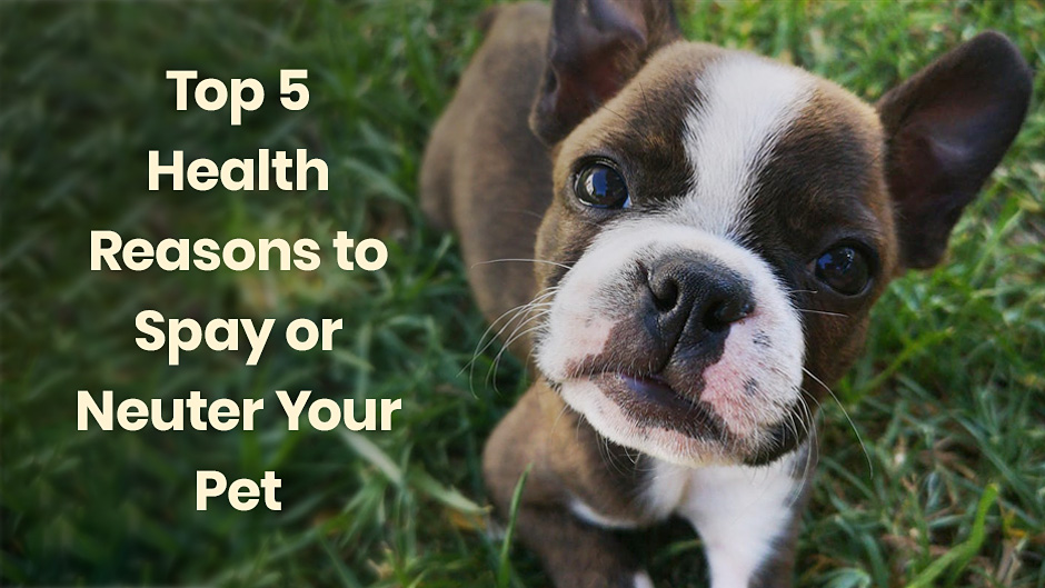 Top 5 Health Reasons to Spay or Neuter Your Pet