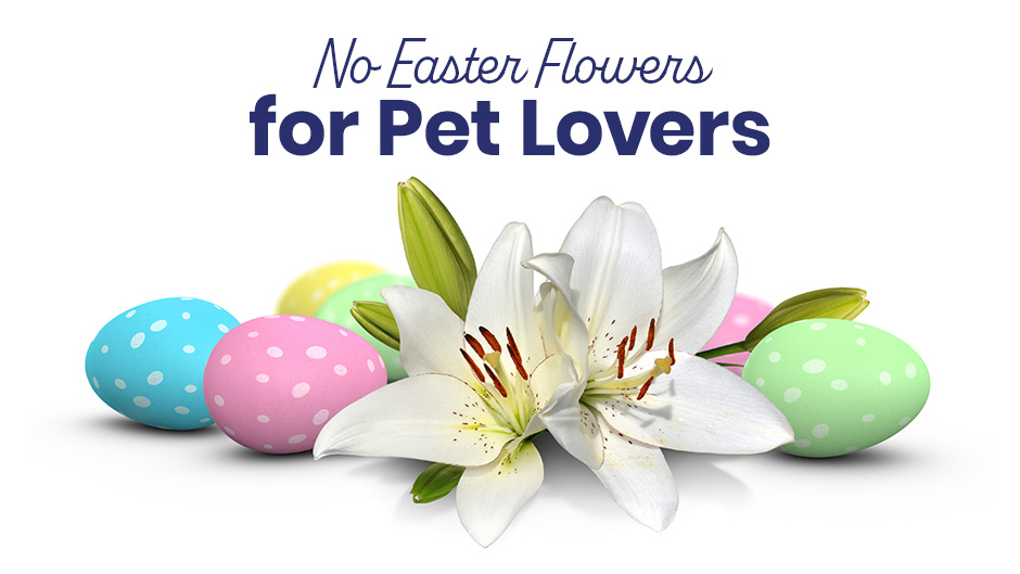 No Easter Flowers for Pet Lovers