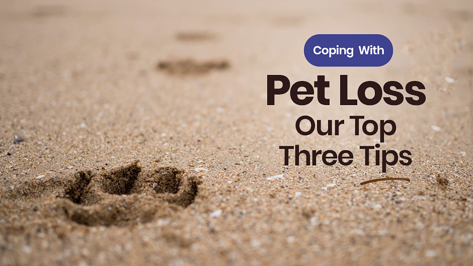 Coping With Pet Loss: Our Top Three Tips