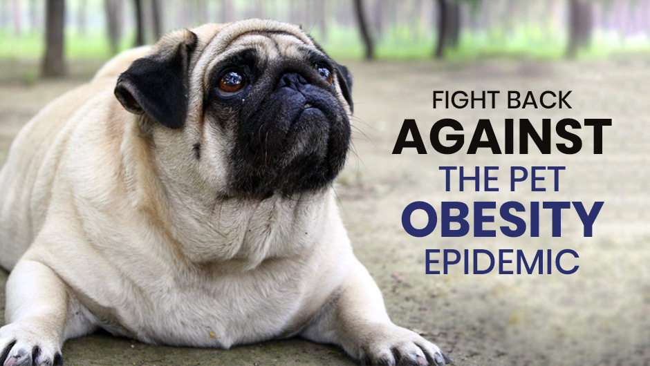 Fight Back Against the Pet Obesity Epidemic