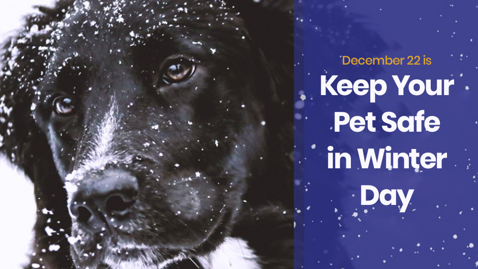 December 22 is Keep Pets Safe in Winter Day