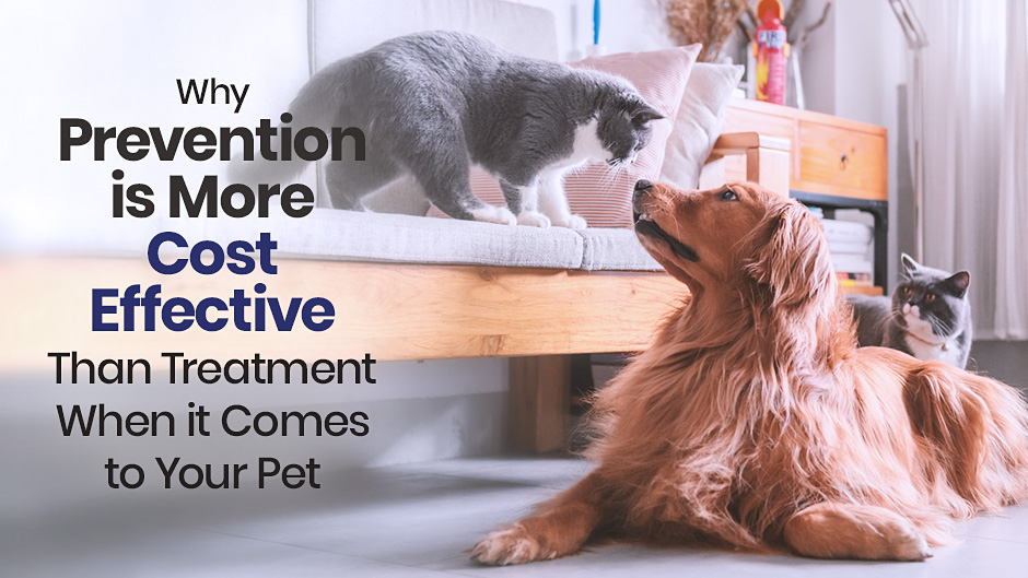 Why Prevention is More Cost Effective than Treatment When it Comes to Your Pet