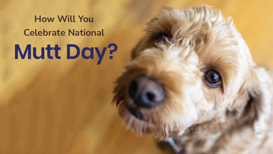 How Will You Celebrate National Mutt Day?