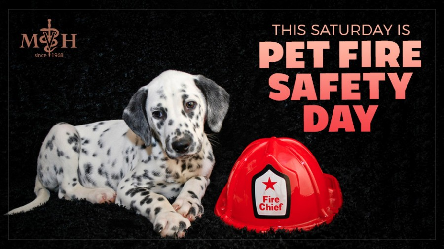 This Saturday is Pet Fire Safety Day