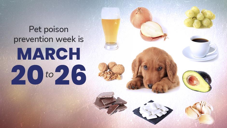 Pet Poison Prevention Week