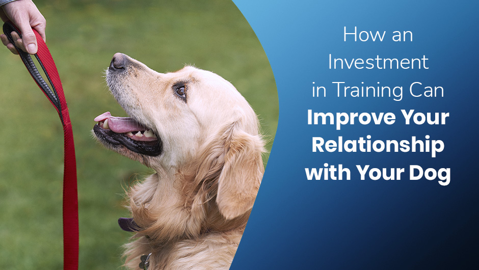 How an Investment in Training Can Improve Your Relationship with Your Dog