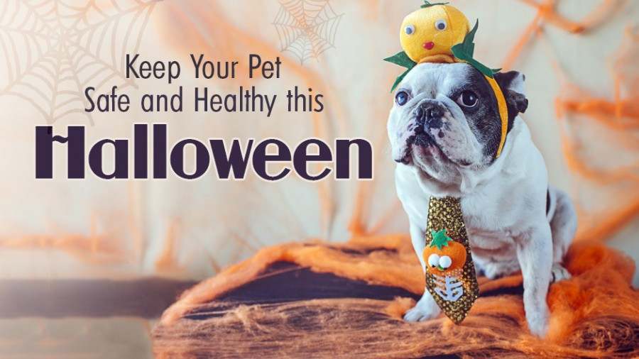 Keep Your Pet Safe and Healthy This Halloween