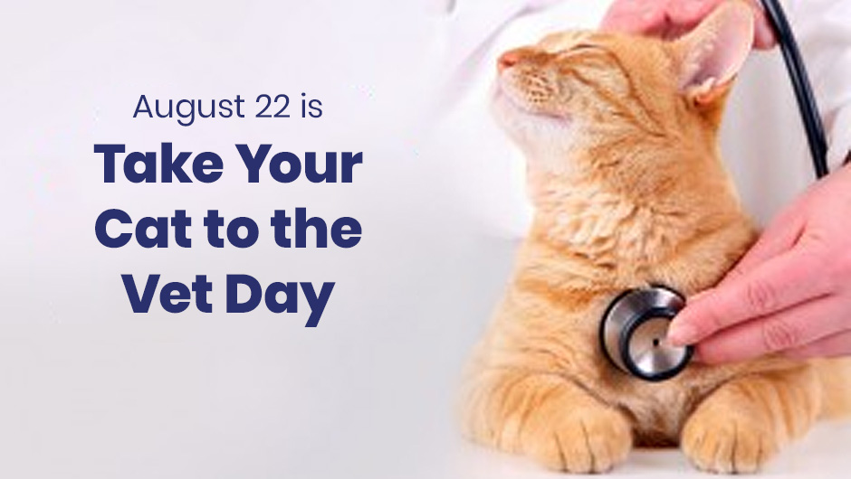 August 22 is National Take Your Cat to the Vet Day