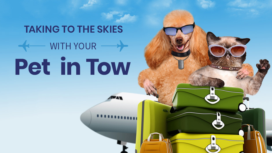 Taking to the Skies with Your Pet in Tow
