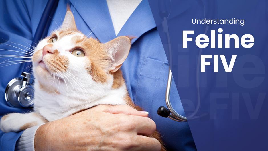 Understanding Feline FIV