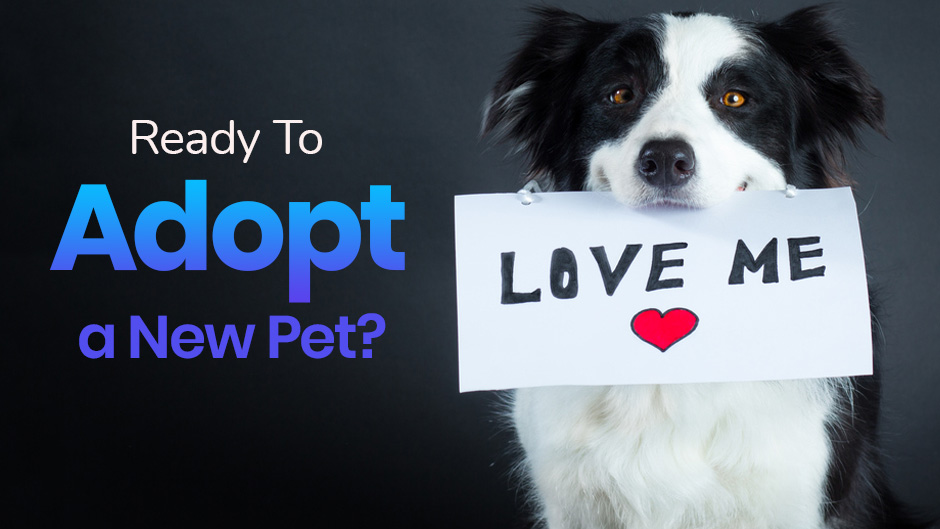 Are You Ready to Adopt a New Pet?