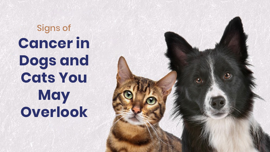 Signs of Cancer in Dogs and Cats You May Overlook