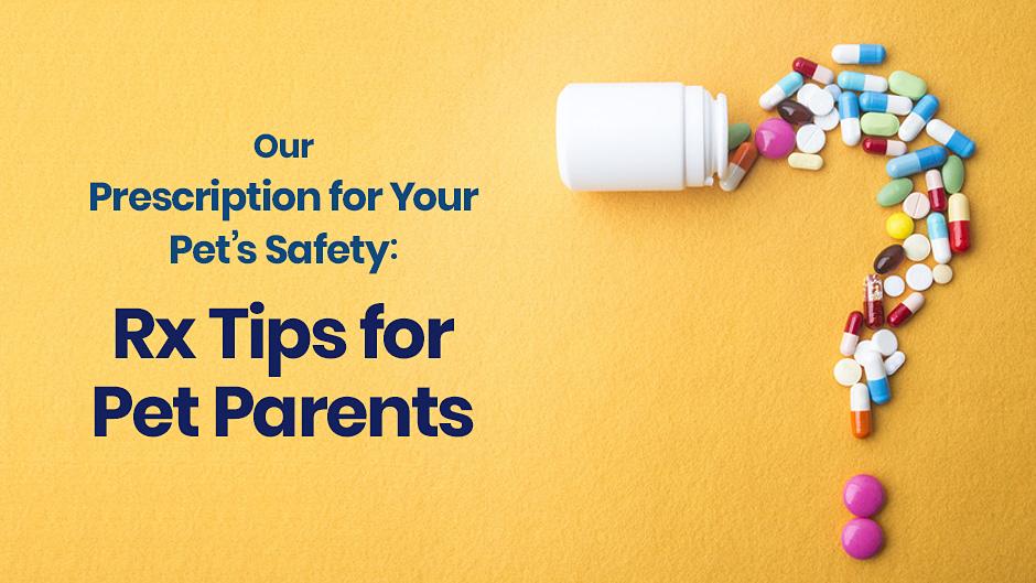 Our Prescription for Your Pet's Safety: Rx Tips for Pet Parents