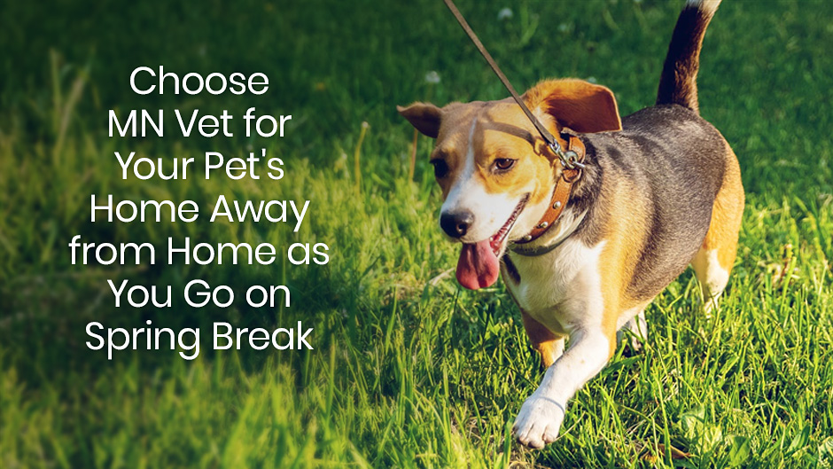 Choose MN Vet for Your Pet's Home Away from Home as You Go on Spring Break